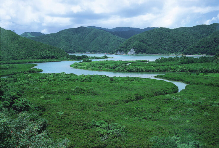 奄美大島 N01マングローブ群生地(鹿児島県観光連盟提供)