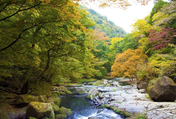 菊池渓谷(紅葉)(提供 熊本県観光連盟)